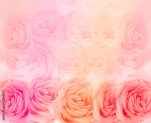 Flower rose background