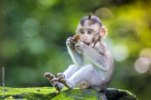 Deurstickers Bali Little baby-monkey