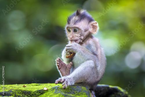 Tuinposter Bali Little baby-monkey