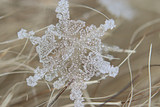 snowflake crystal natural snow