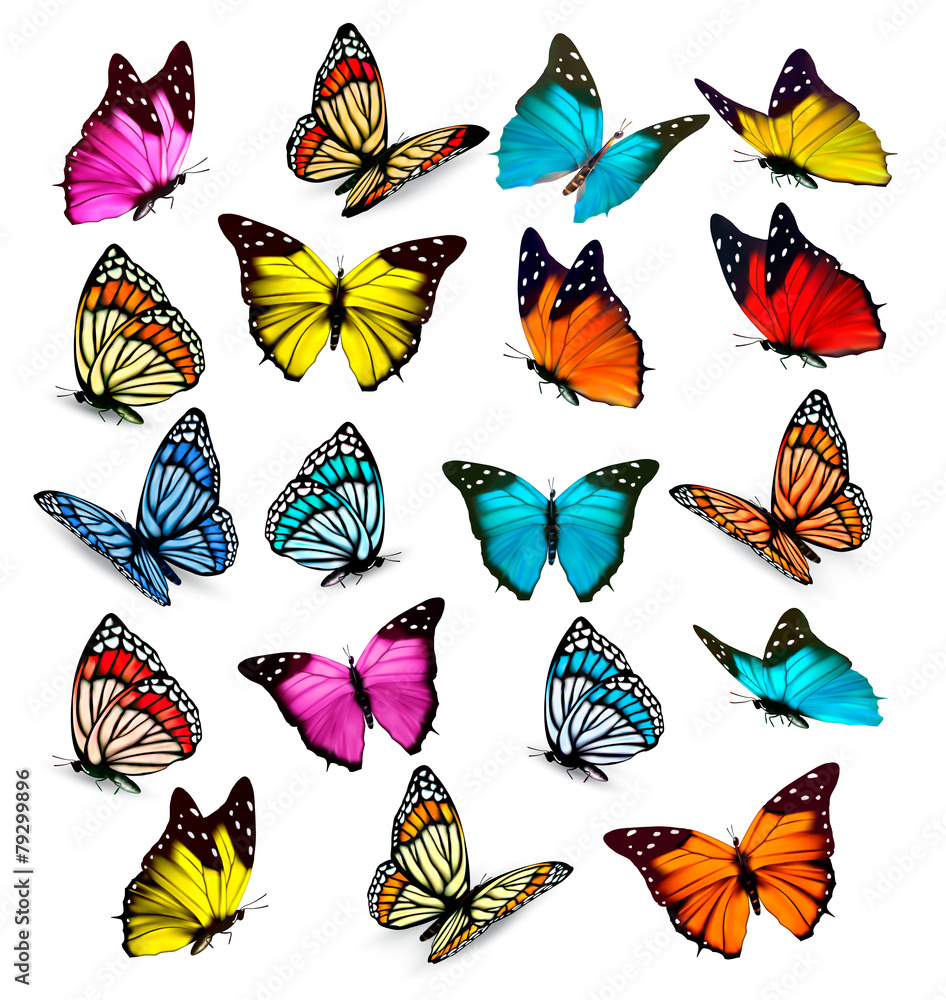 Fototapeta Big collection of colorful butterflies. Vector