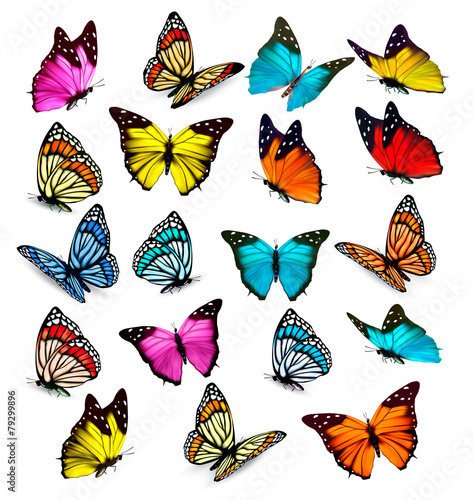 Big collection of colorful butterflies. Vector #79299896