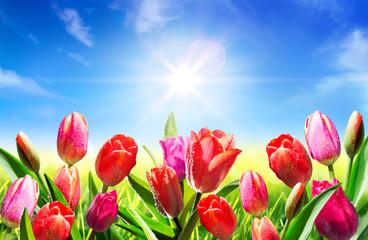 Obraz na Szkle blooming in springtime