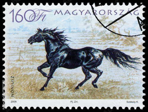 Photographie  stamp printed in Hungary shows hungarian horse