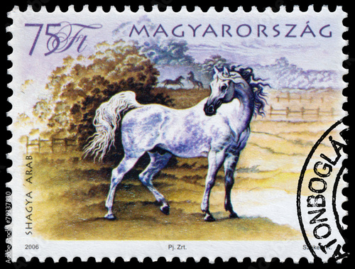 stamp printed in Hungary shows hungarian horse Poster