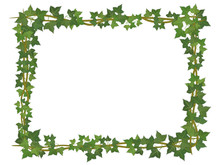 Square Decorative Frame Of Ivy...