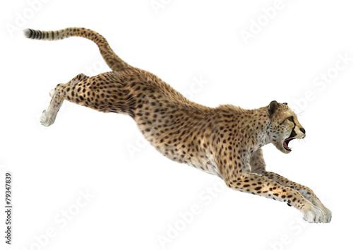 Fotografie, Obraz  Cheetah