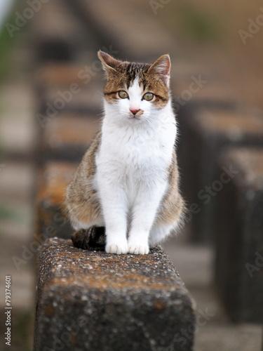 Foto  幼い猫