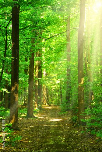 Foto auf Gartenposter Wald sunlight forest