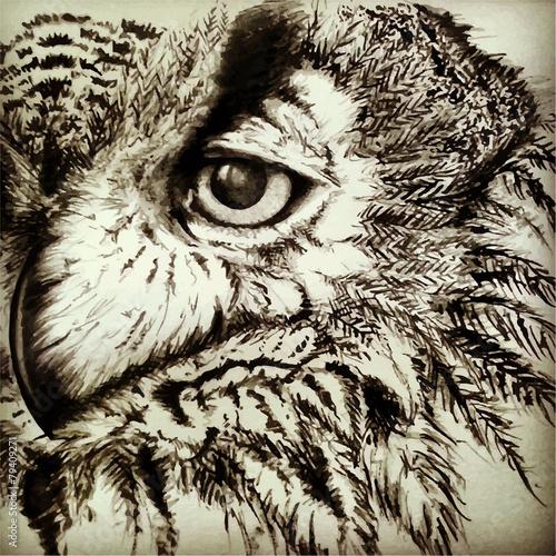Poster Croquis dessinés à la main des animaux Vintage owl
