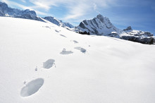 Footsteps On The Snow. Swiss A...