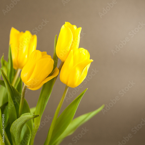 Poster Tulp Yellow tulips on a gray surface