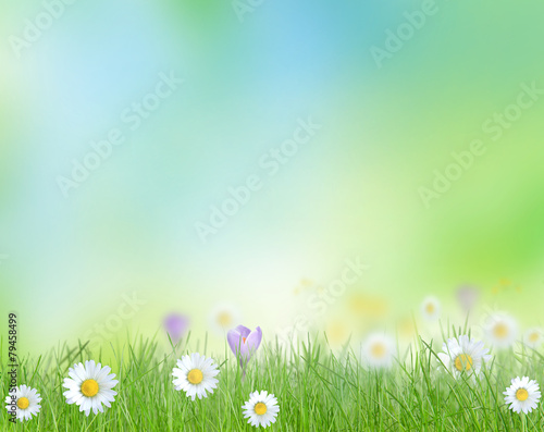 Poster Fleuriste Spring meadow