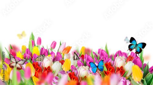 piekny-bukiet-tulipanow