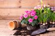 canvas print picture - Frühlingsblumen pflanzen