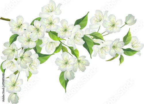 Obrazy kwiat jabłoni   kwitnaca-galaz-jabloni