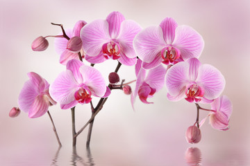 Panel Szklany Storczyki Pink orchids flower background design