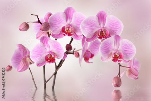 Pink orchids flower background design