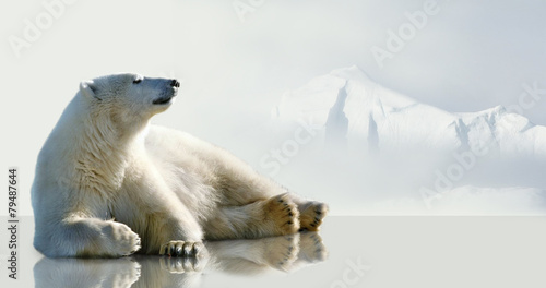 Fotografie, Tablou Polar bear lying on the ice in the environment of the iceberg.
