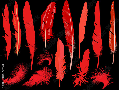fourteen red feathers isolated on black