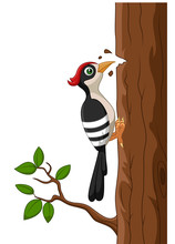 Cartoon Woodpecker On A Tree