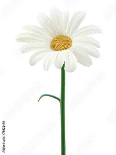 Fotografie, Obraz  Daisy isolated. Vector illustration