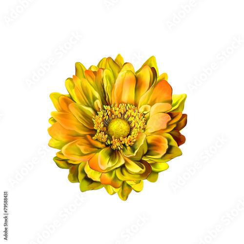 Fotografie, Obraz  Colorful Mona Lisa flower, Spring bloom