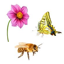 Bee, Old World Swallowtail Butterfly, Pink Dahlia Flower