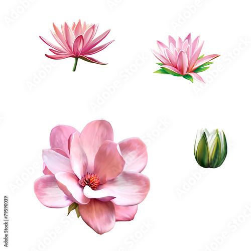 Photo  Pink magnolia flower, Spring bloom, Lotus, water lily