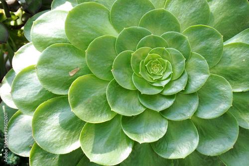 Papiers peints Cactus beatiful lobe of the succulent plants