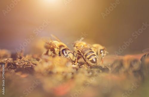 Recess Fitting Bee Closeup photo of honey bee