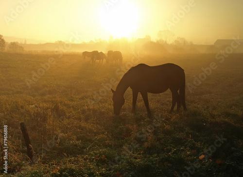 Garden Poster Brown horses in the morning fog