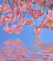 Obraz na Szklesakura tree