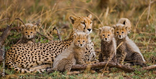 Photo  The female cheetah with her cubs