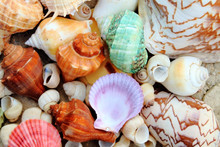 Color Shells