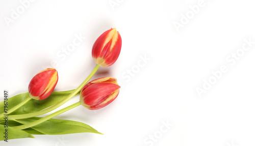 Foto op Plexiglas Tulp Tulpenmotiv