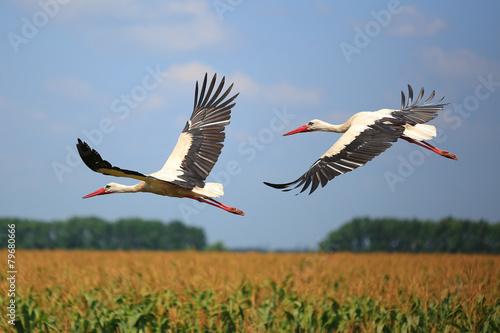 Naklejki Bocian  stork
