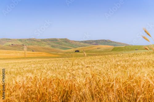 Fotografie, Obraz  Tra Puglia e Basilicata: paesaggio agreste primaverile.ITALIA