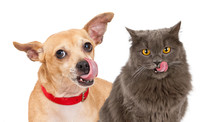 Dog And Cat Licking Lips