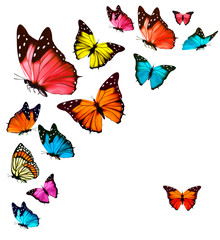 Fototapeta Background with colorful butterflies. Vector.