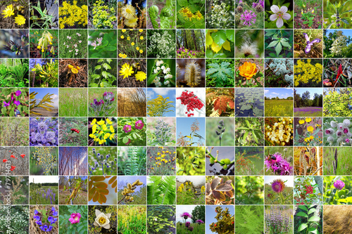 Photo  Wild-growing herbs of Siberia