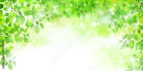 Fotografía  葉 新緑 背景