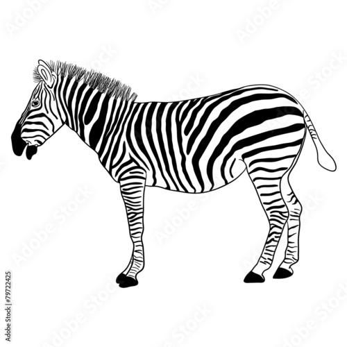 In de dag Zebra Zebra, vector format