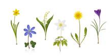 Springtime Wildflowers