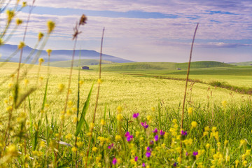 FototapetaTra Puglia e Basilicata: paesaggio agreste primaverile.ITALIA