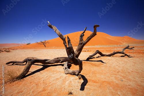 Foto auf Acrylglas Bestsellers dry tree Sossusvlei, Namibia