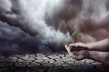 Plantando Na Terra Seca
