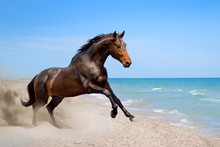 Beautiful Horse Run  Along The...
