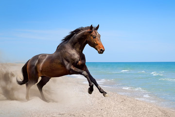 Fototapeta Koń Beautiful horse run along the shore of the sea