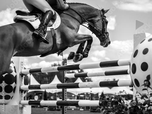 Equestrian #79773674